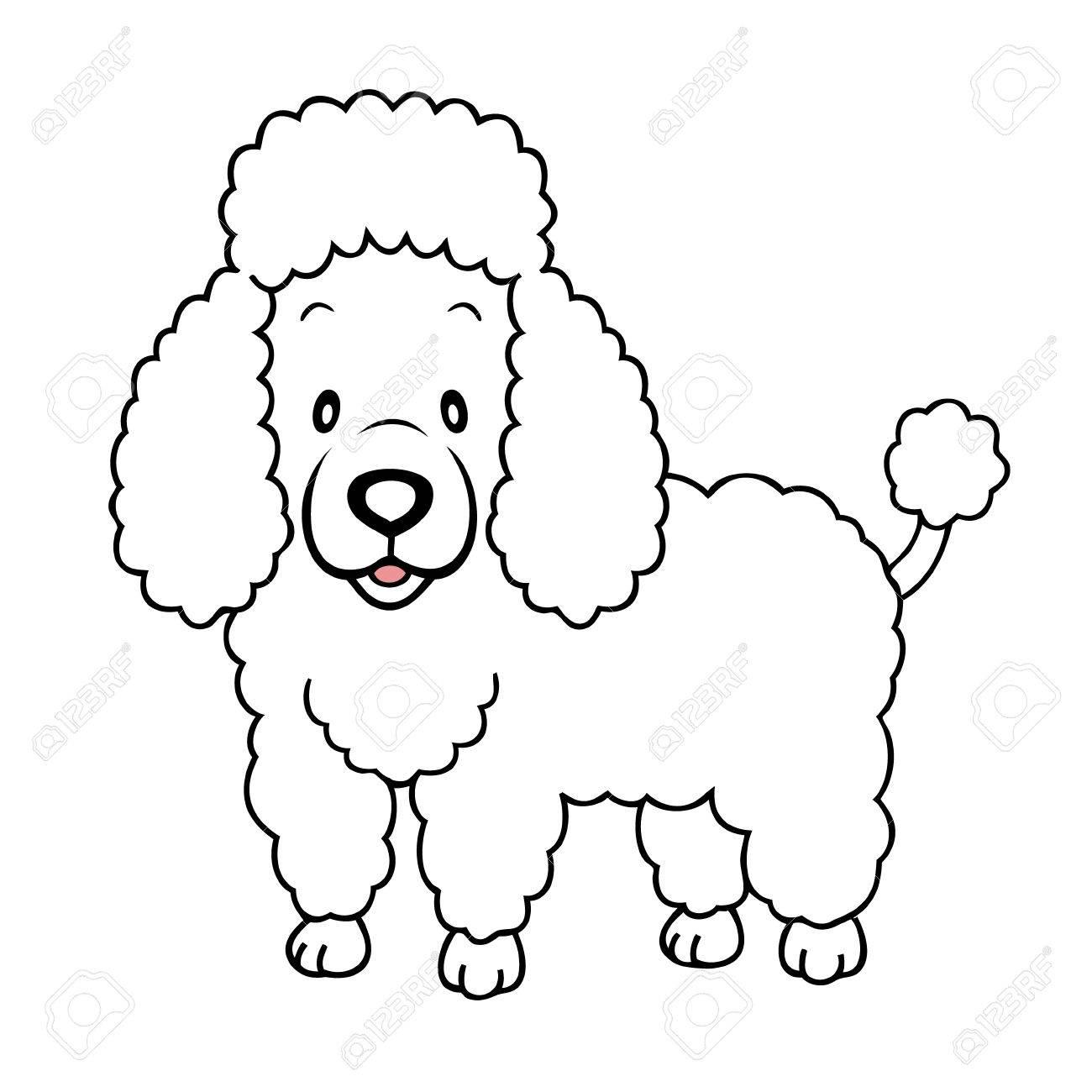 White Poodle isolated.