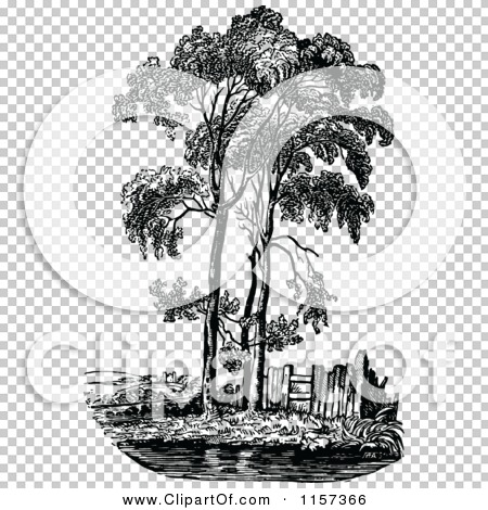 Clipart of a Retro Vintage Black and White Poplar Tree.