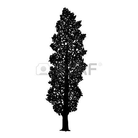 1,905 Poplar Tree Stock Illustrations, Cliparts And Royalty Free.