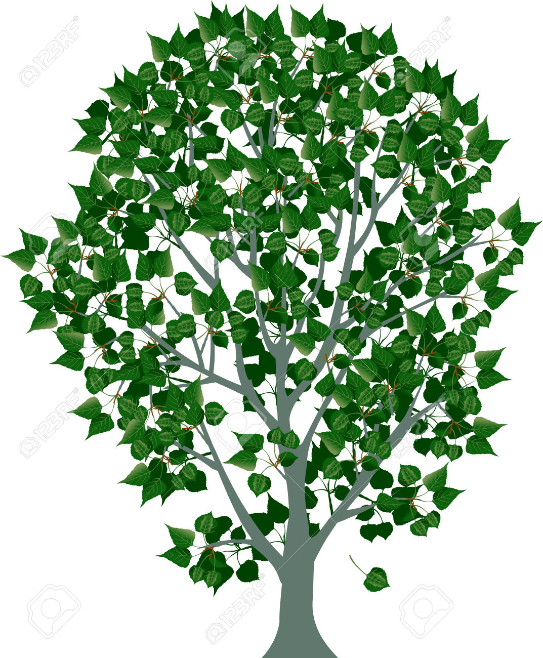 Illustration Of Tree, White Poplar With Green Leaves Royalty Free.
