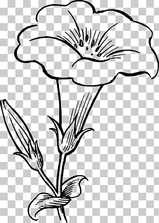 Flower Drawing Black and white , Pumpkin Blossom s PNG.