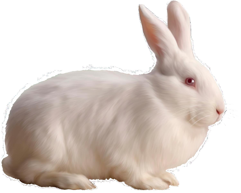 White Rabbit Free Clipart.