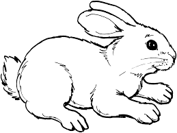 Image result for rabbit clipart black and white.