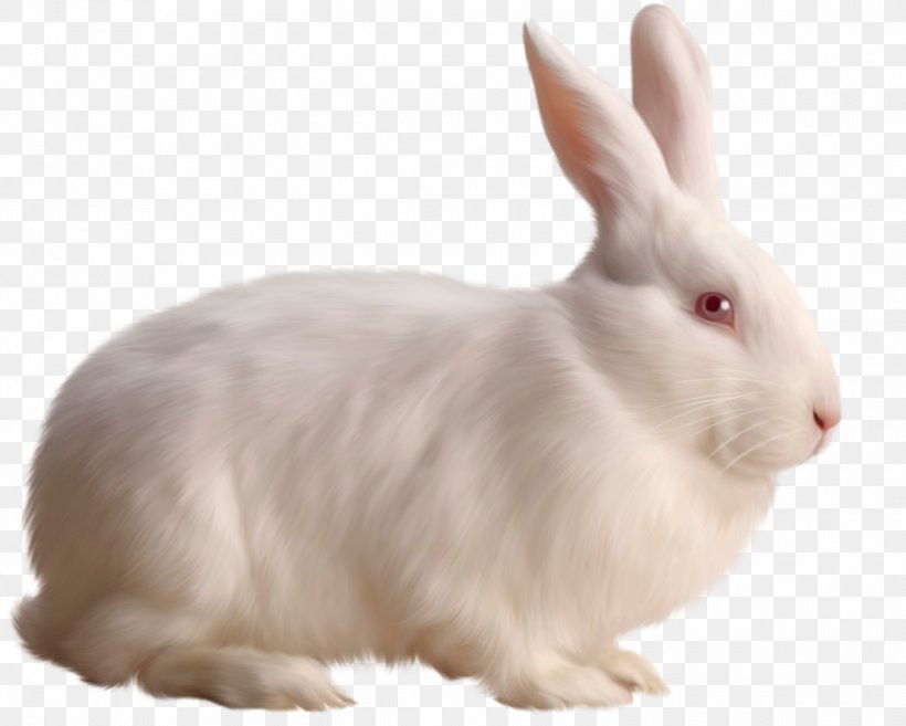 Rabbit Clip Art, PNG, 1500x1203px, Cottontail Rabbit.