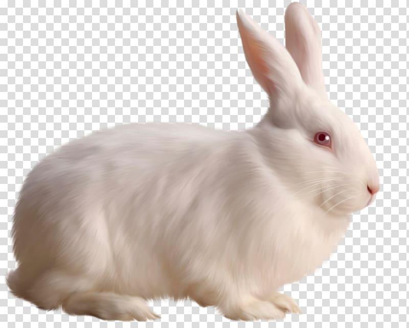 Rabbit , White Rabbit Free , white rabbit illustration.