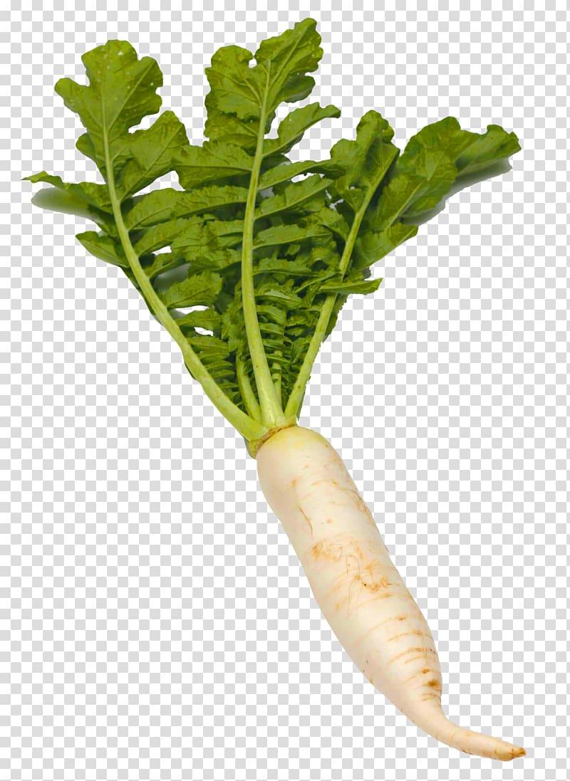 White radish illustration, Daikon Kung Pao chicken Vegetable.