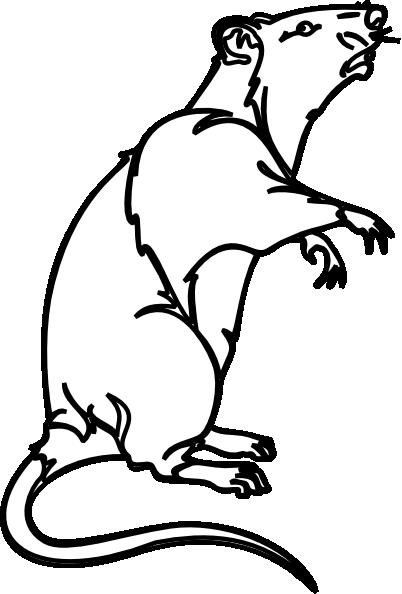 White Rat Clipart.