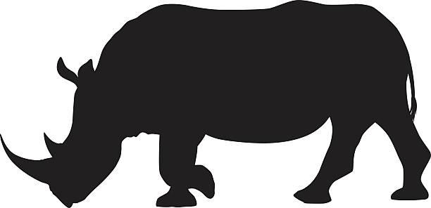 Best White Rhino Illustrations, Royalty.