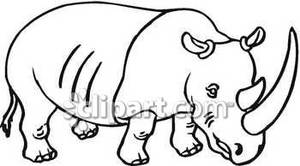 Black and White Rhinoceros.