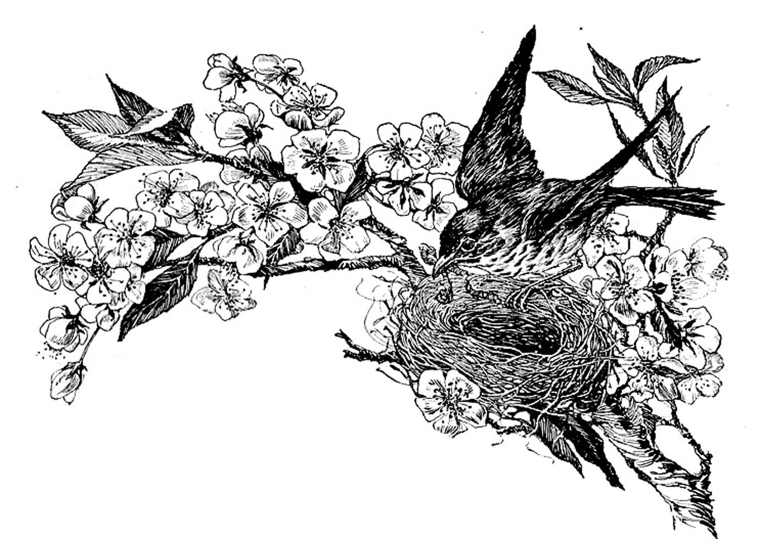 Blue Ridge Corner Images: Black and White Bird's Nest Flower Clip.