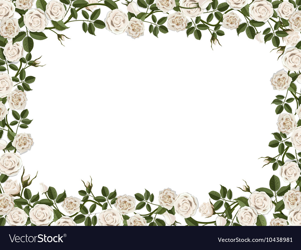 Square border of white roses.