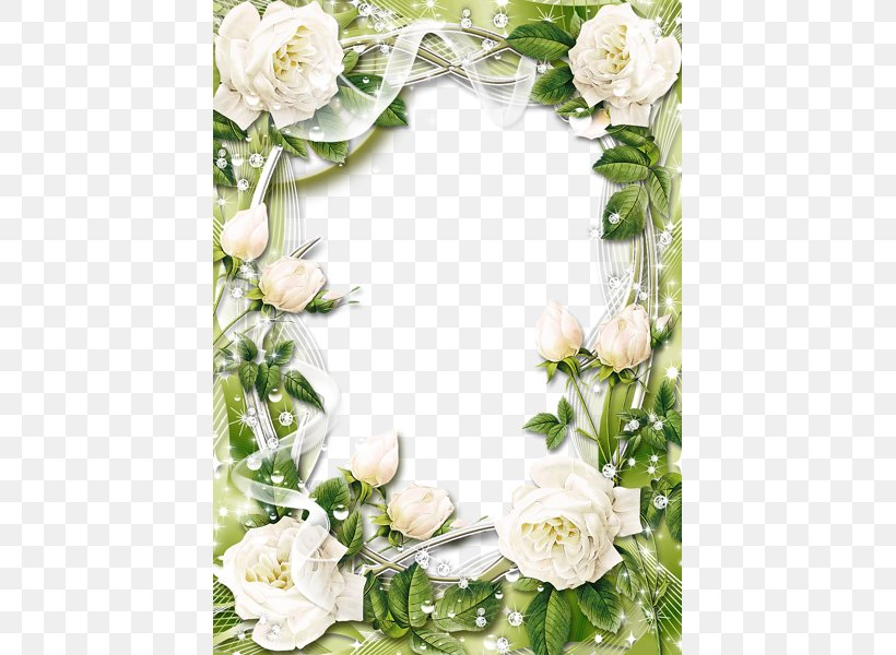Picture Frame Rose White Clip Art, PNG, 429x600px, Picture.