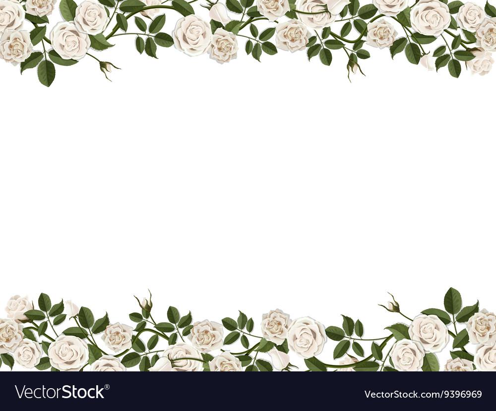 Border of white roses.