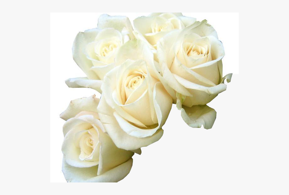 Rose White Flower Bouquet Green Wallpaper Five White.