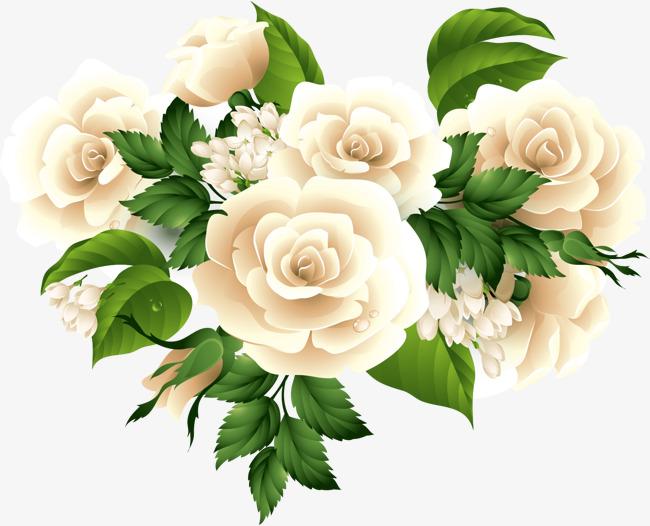 White Rose Vector at GetDrawings.com.