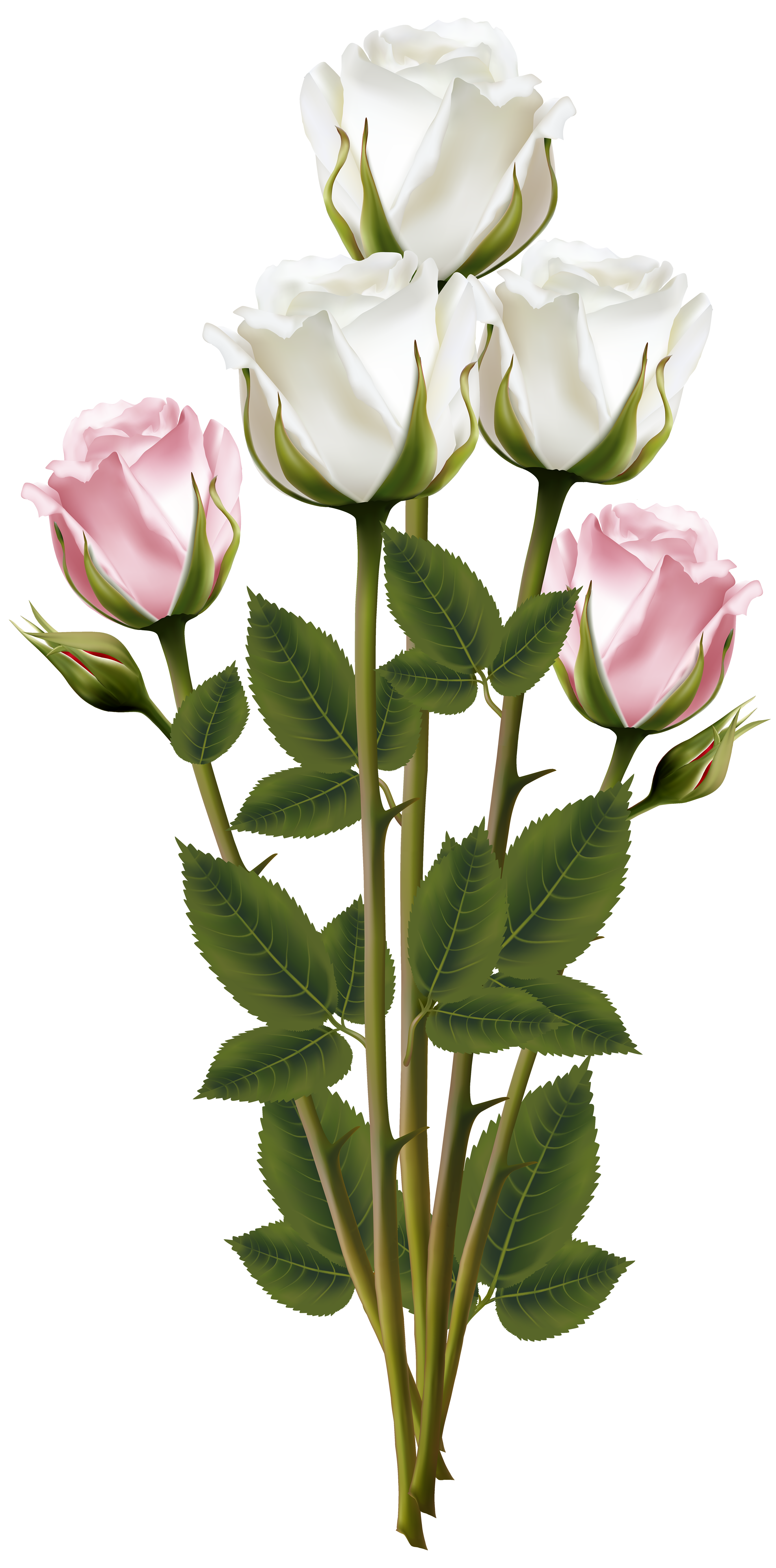 White and Pink Rose Bouquet Transparent PNG Clip Art Image.