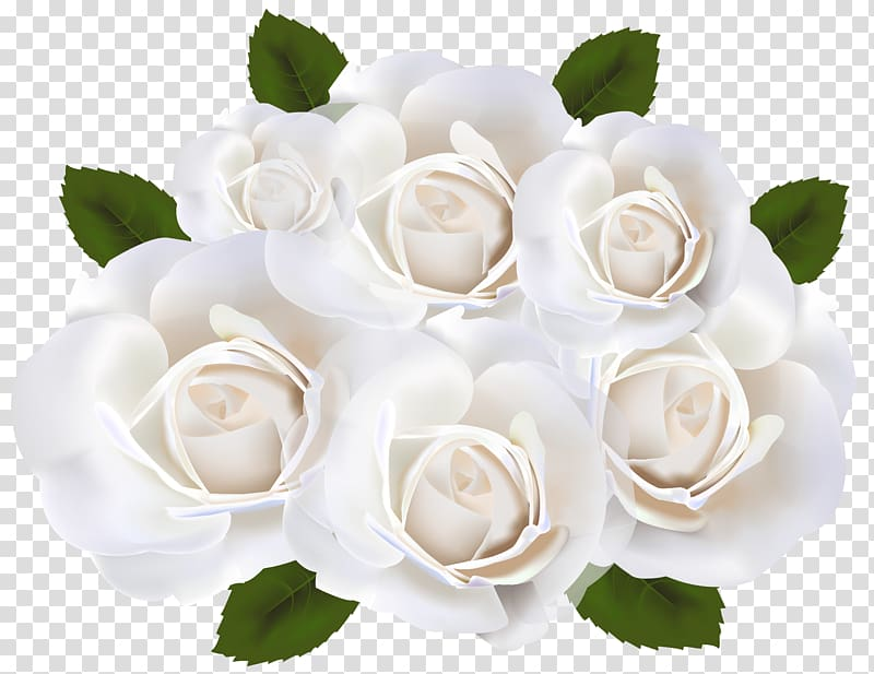 White petaled rose bouquet graphics, Garden roses White.
