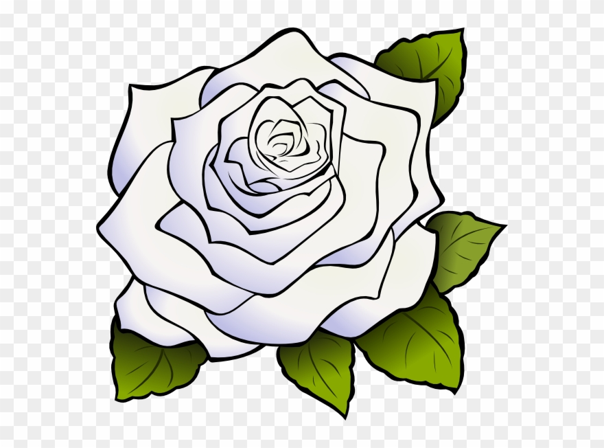 Download White Rose Png Clipart Clip Art Drawing Flower.