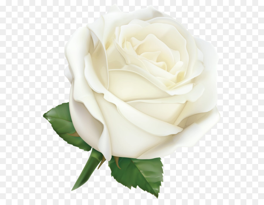White Rose Png & Free White Rose.png Transparent Images #28469.