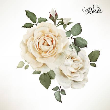 98,499 White Rose Stock Vector Illustration And Royalty Free White.