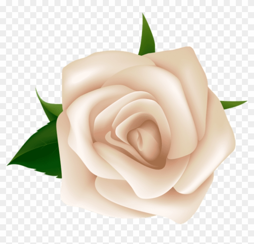 Free Png Download White Rose Png Images Background.