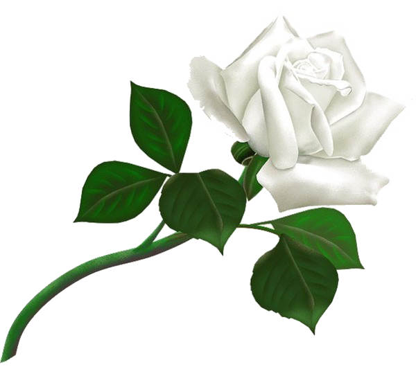 White roses PNG images, free download flower pixtures.