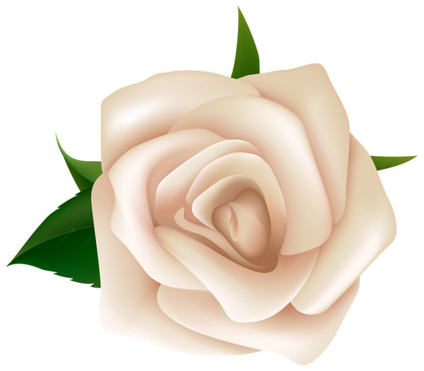 White Rose Clipart PNG Image.