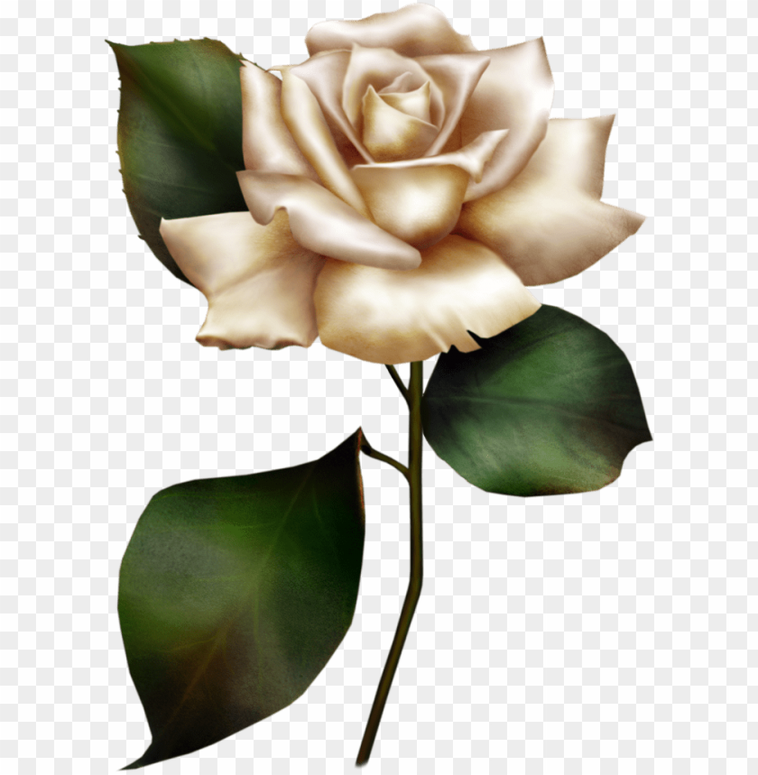 white rose clipart PNG image with transparent background.