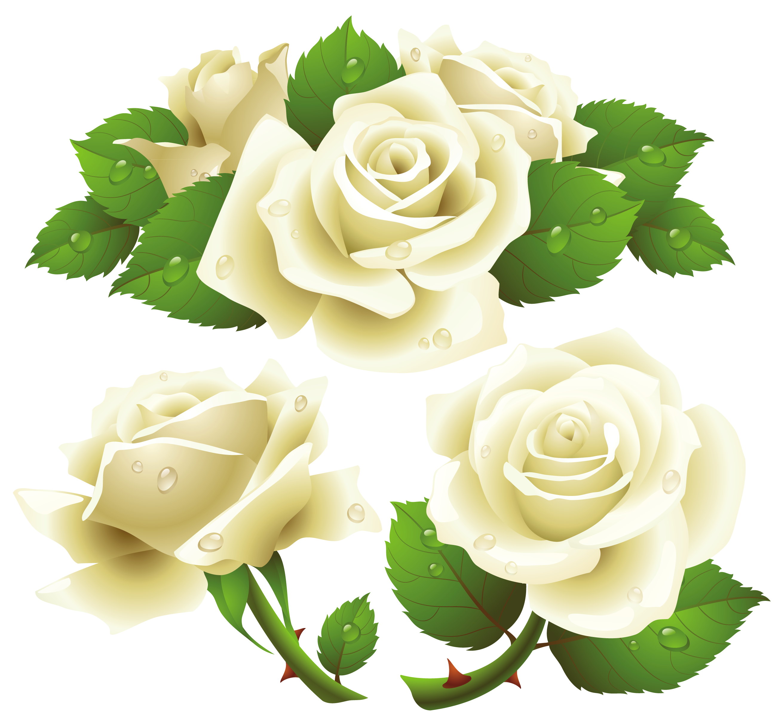 Free White Rose Transparent Background, Download Free Clip.
