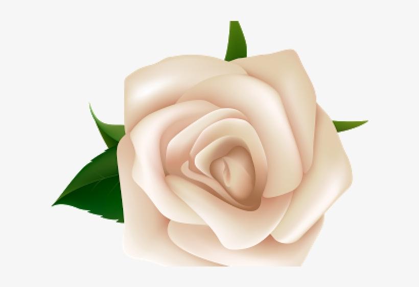 White Rose Clipart Natural Flower.