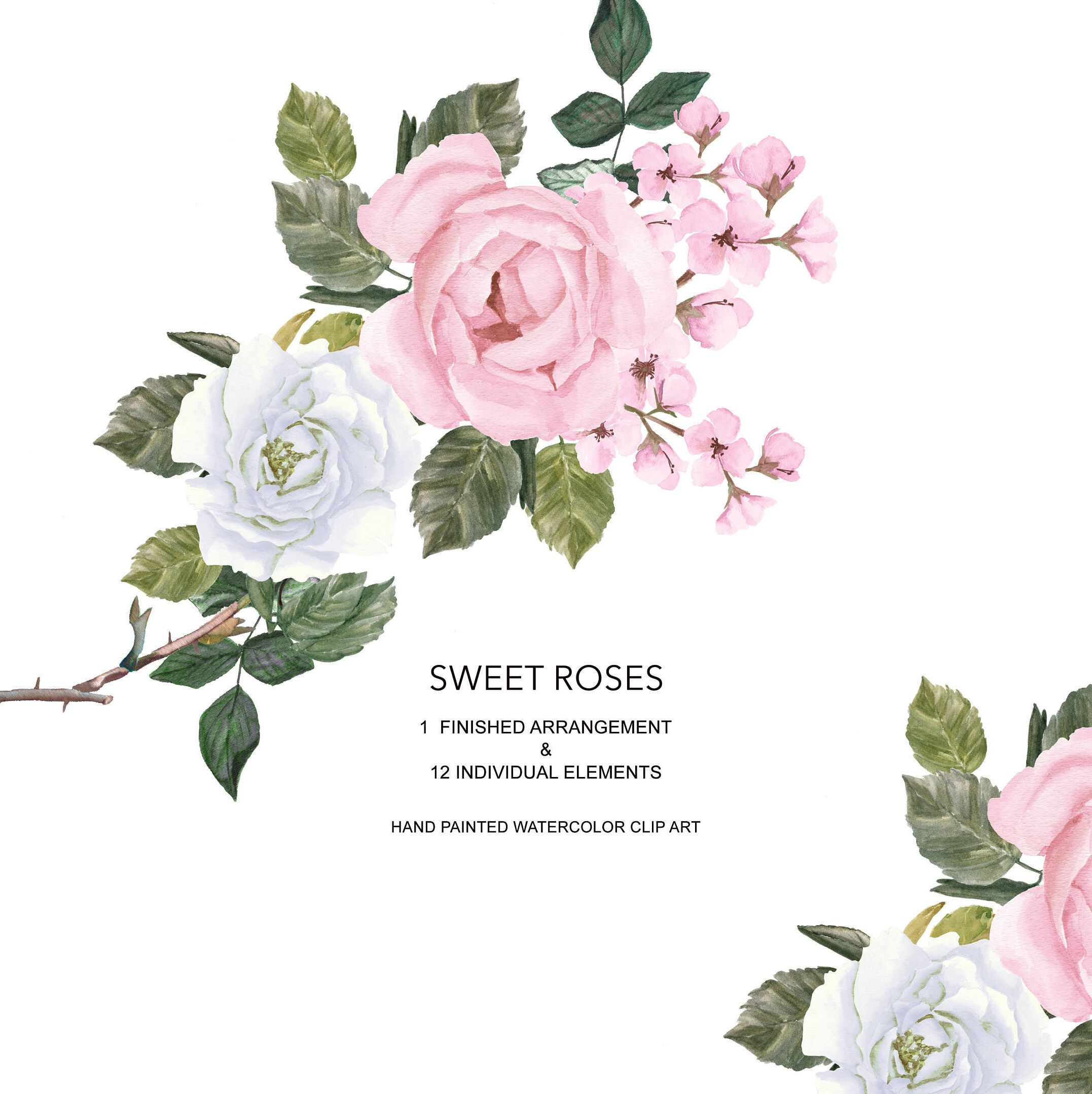 Watercolor Pink and White Roses Clipart.
