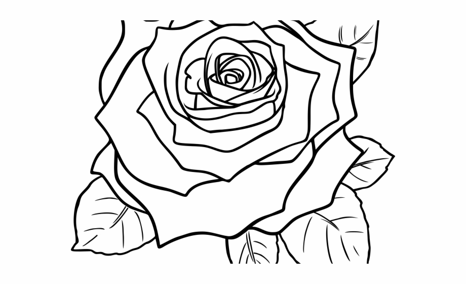 White Rose Clipart Png Format.