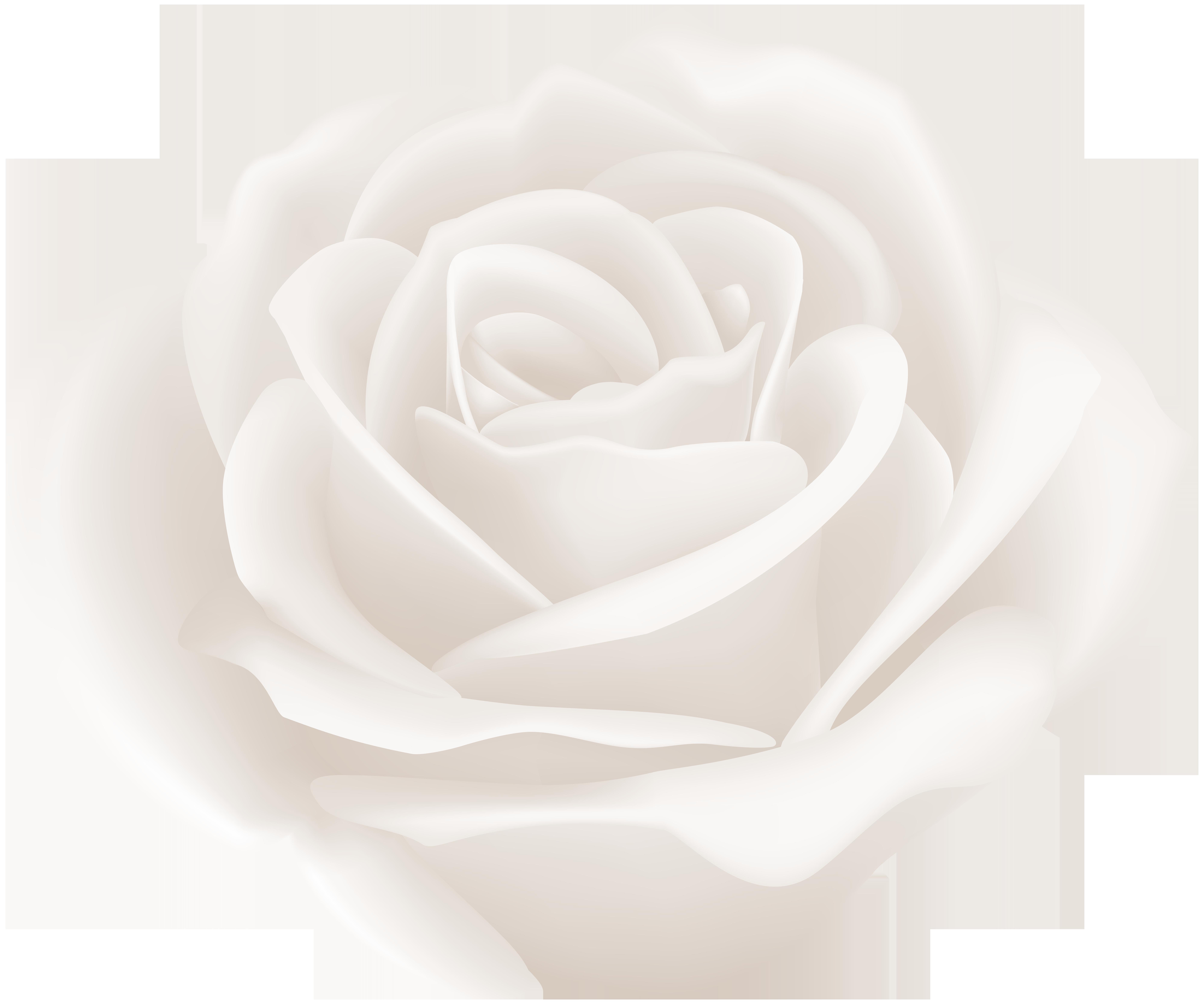 White Rose Clip Art Image.