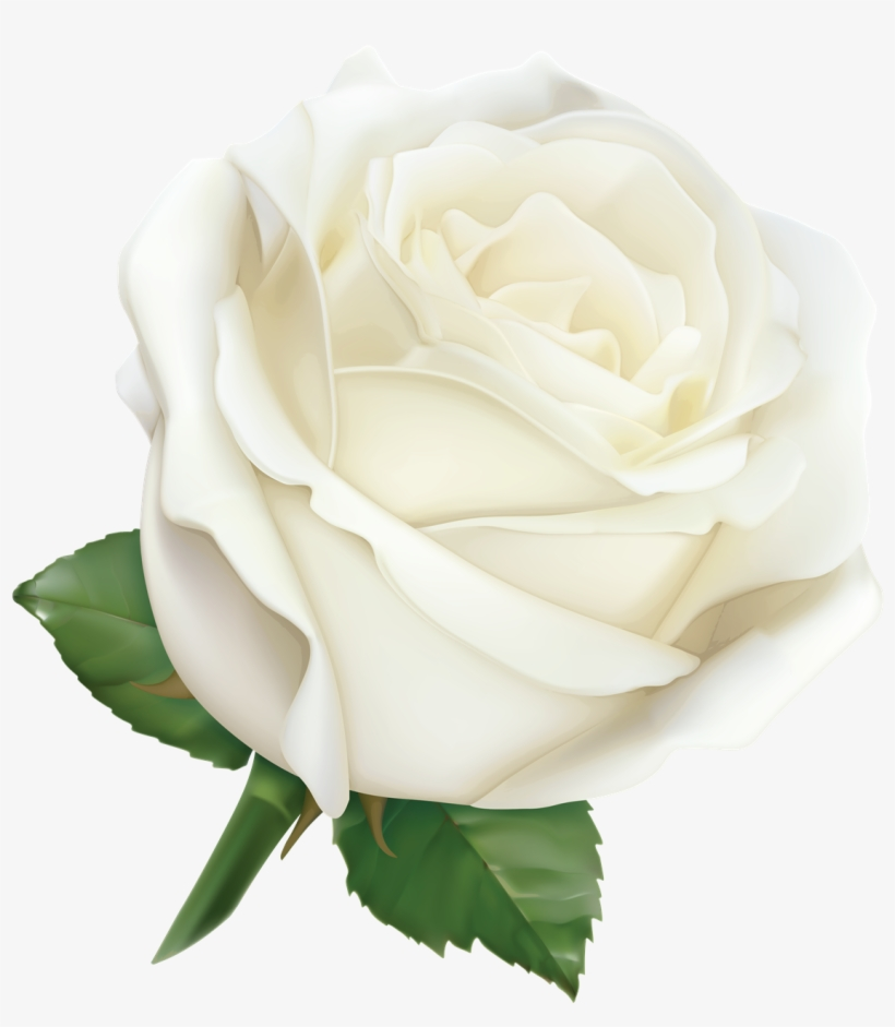 White Rose Png High.