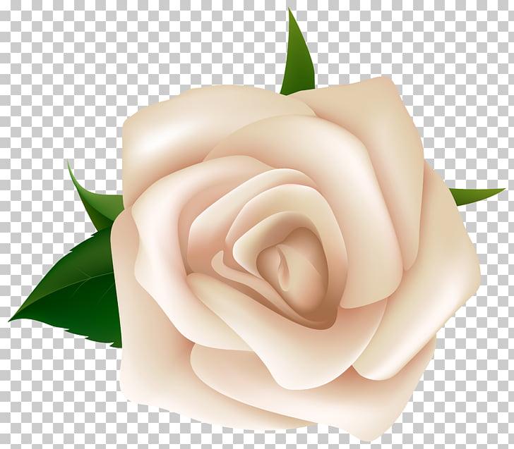 Black rose White , white roses PNG clipart.