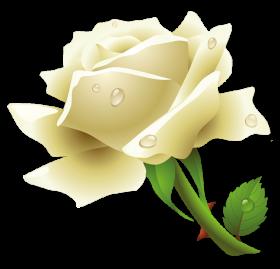 White Rose PNG Transparent Images.