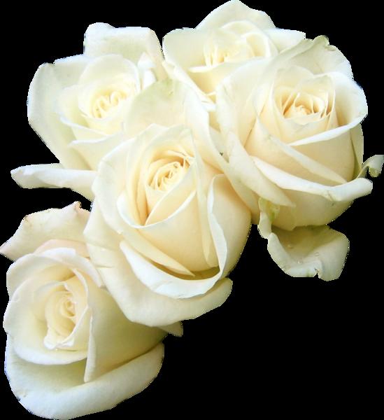 Rose Flower bouquet White Clip art.