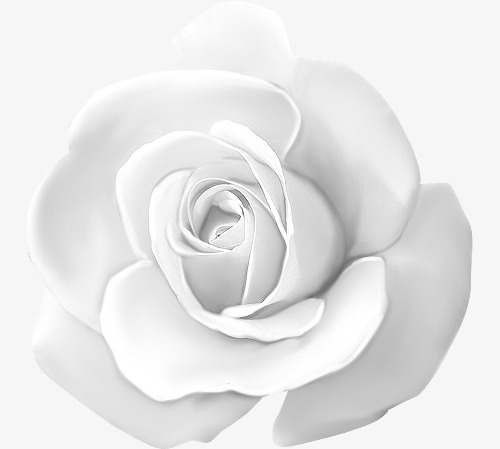 White Roses, Float, Flowers PNG Transparent Image and Clipart for.