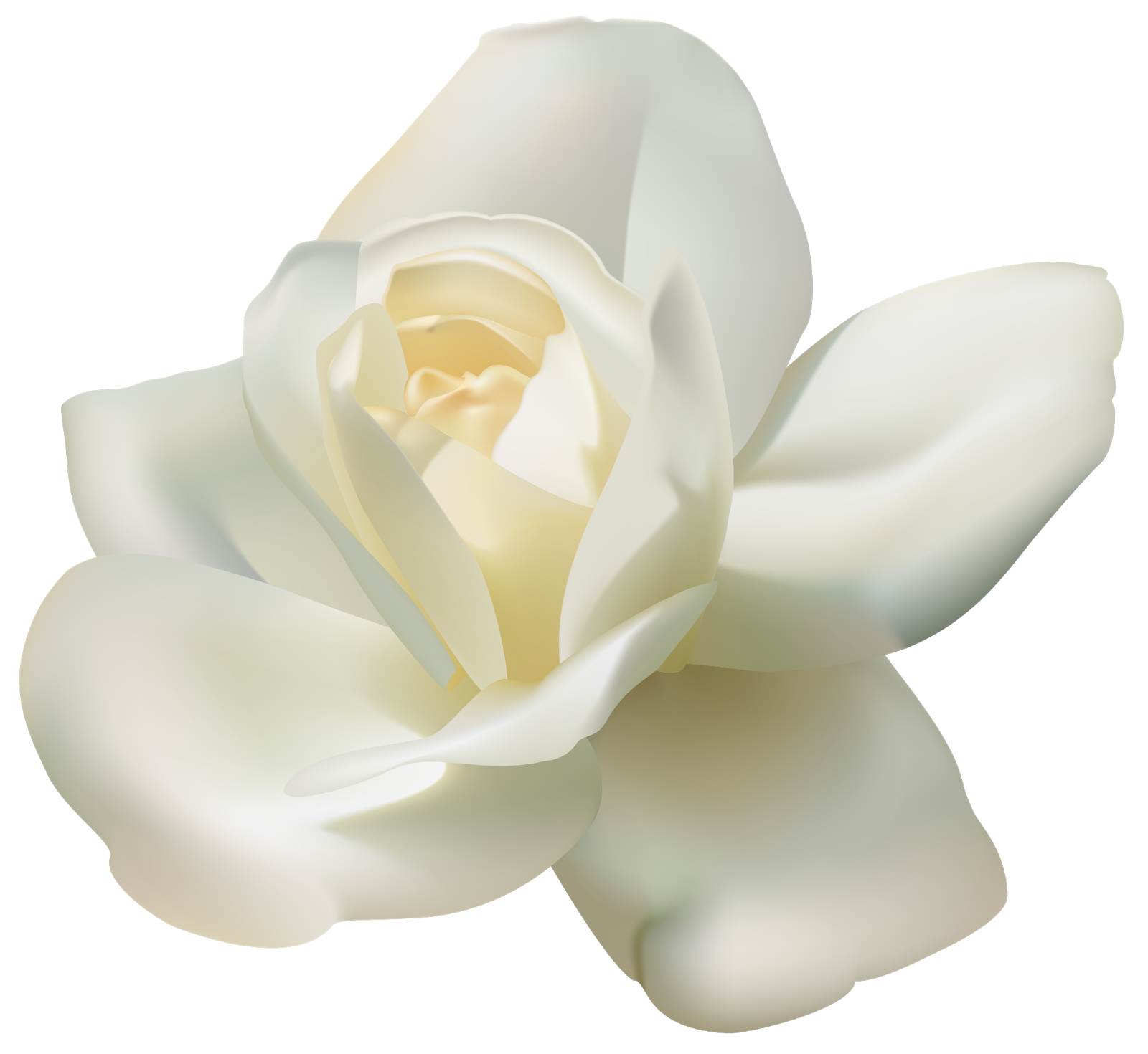 PNG Sector: Rose Flower White.