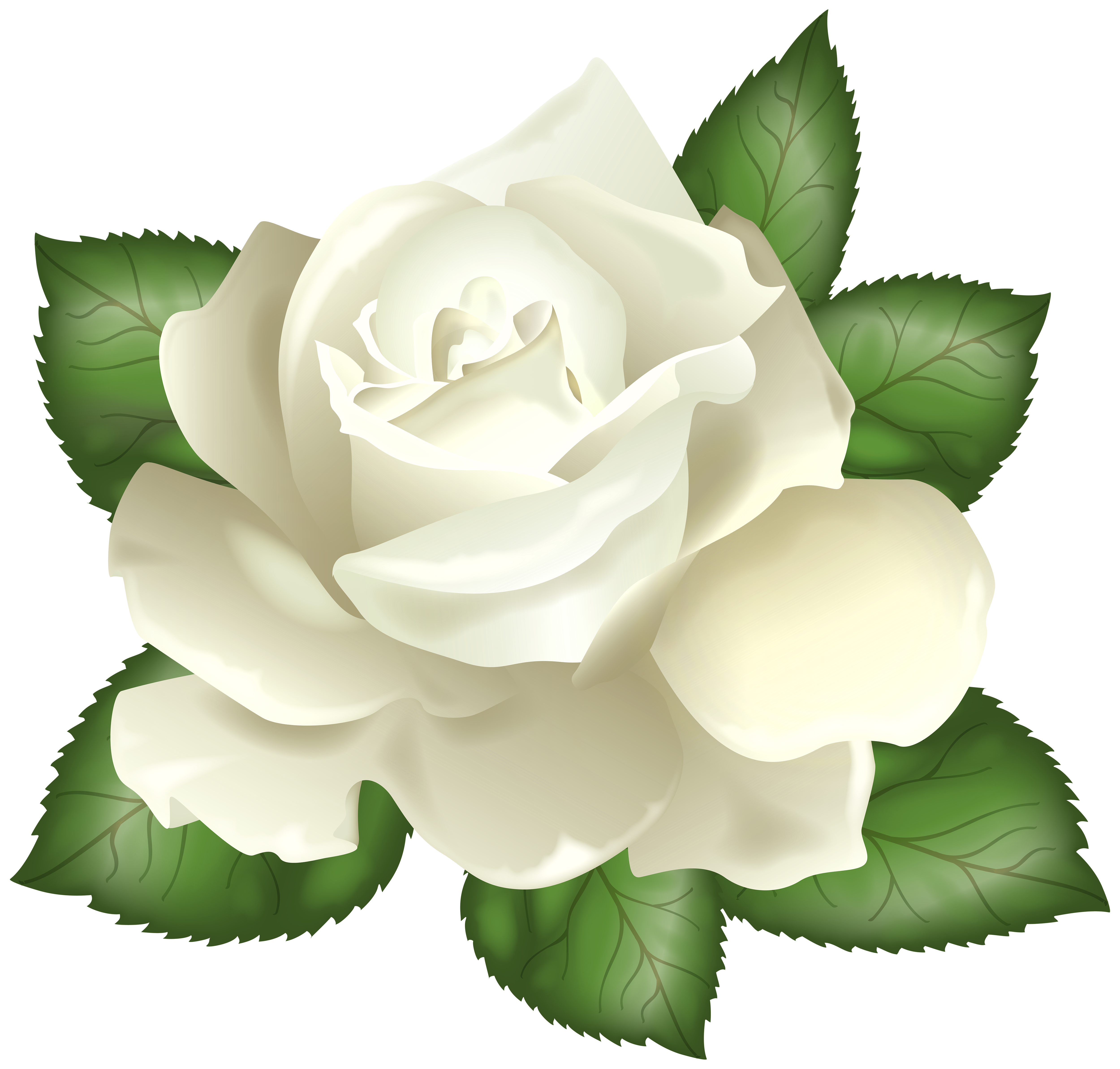 White Rose Transparent PNG Clip Art Picture.