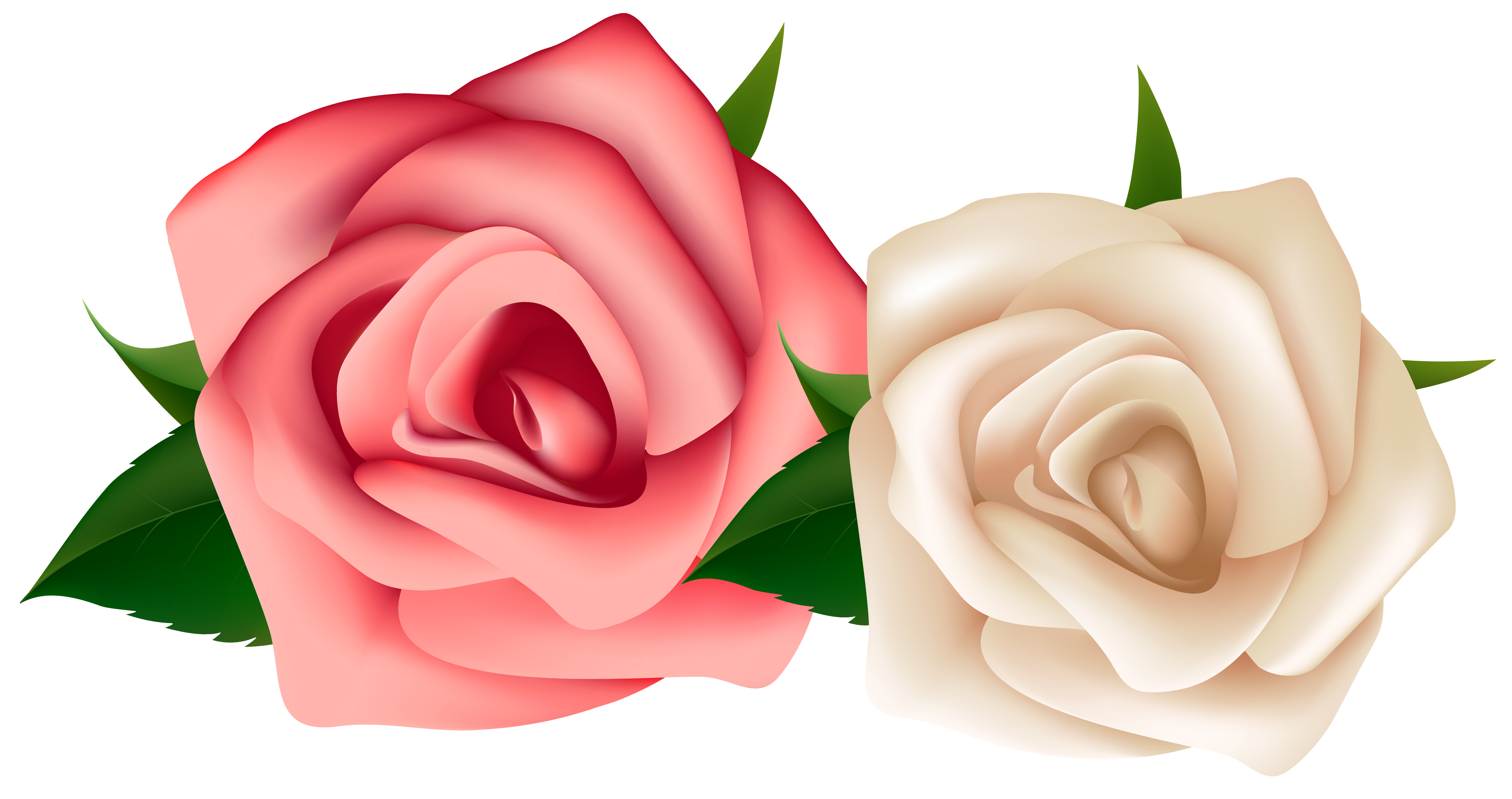 Red and White Roses Clipart PNG Image.