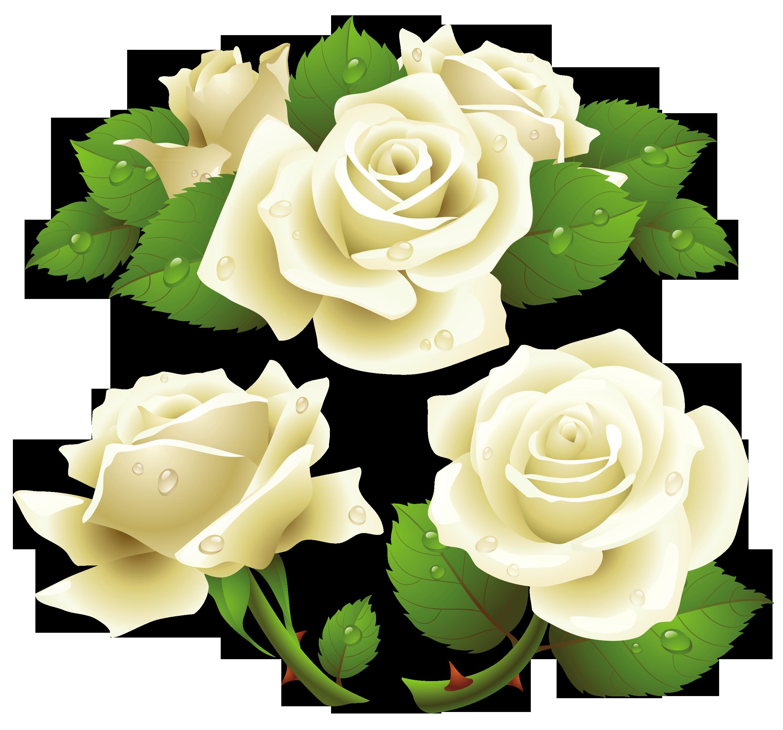 White roses clipart.