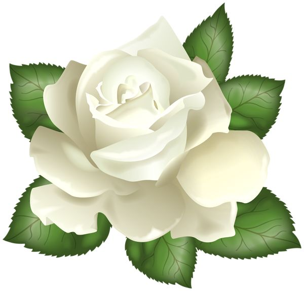 17 Best images about clipart white roses on Pinterest.