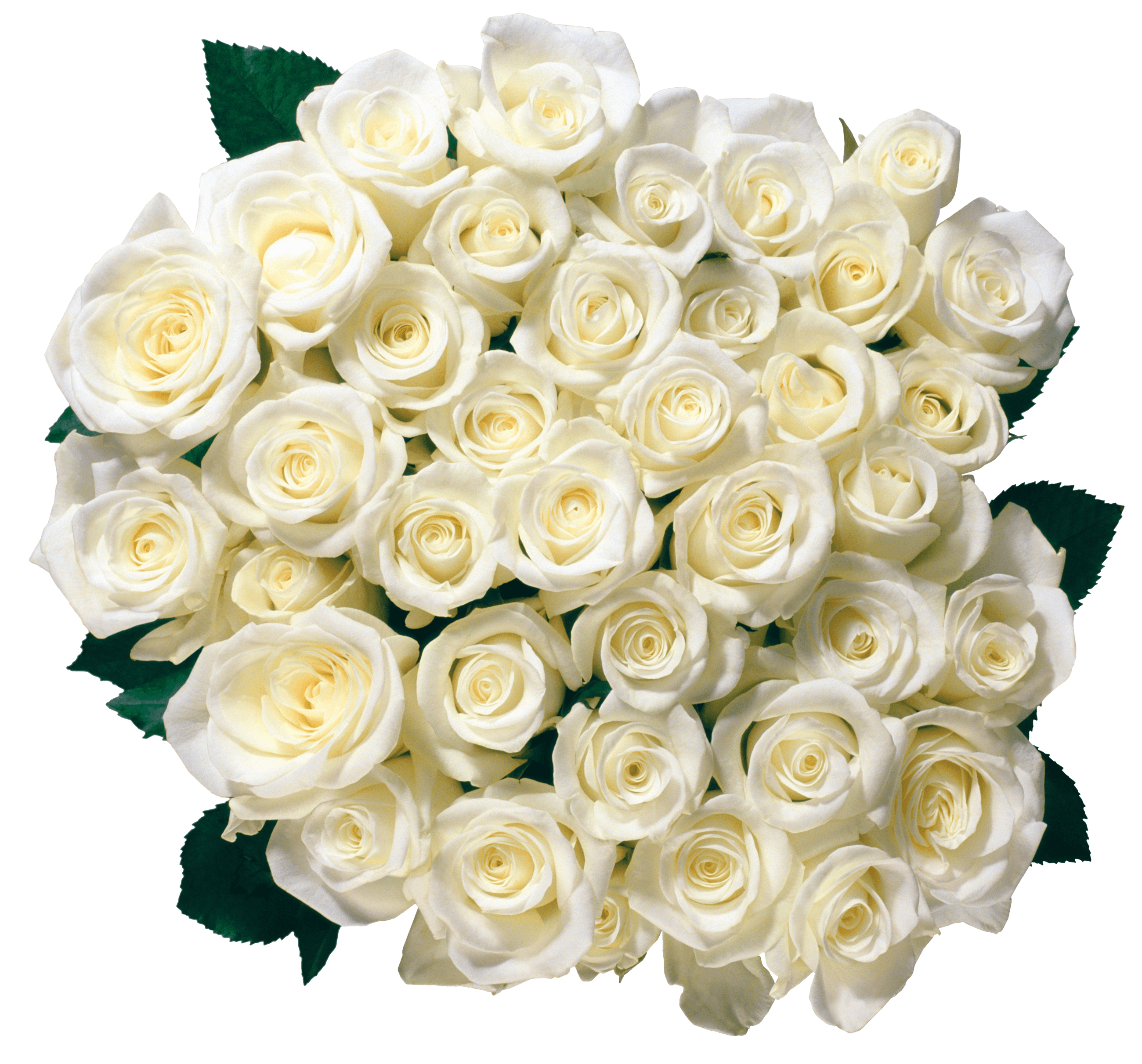 Bouquet Of White Roses transparent PNG.