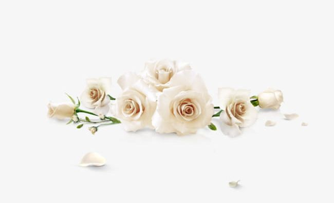 White Roses PNG, Clipart, Flowers, Hand, Hand Painted, Home.