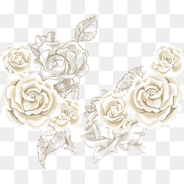 White Rose PNG Images.