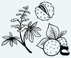 Rosskastanie, Blumen, Blatt UND Samen stock.