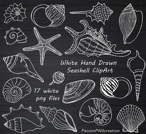 White Hand Drawn Seashell Clipart, Shell clip art, Digital.