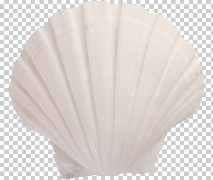 Lighting Seashell, White Shell PNG clipart.