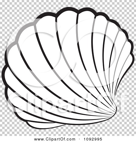Shell Clipart No Background.